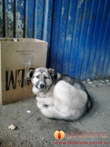 Добродушный пес с покусанным ухом отказывался уходить с холодной остановки