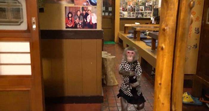 Макаки работают официантами в японском баре