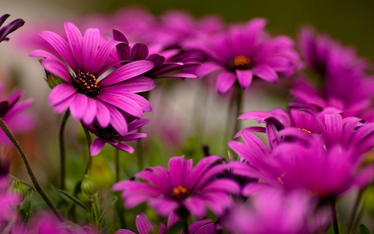 NewPix.ru - Цветы — улыбка Создателя