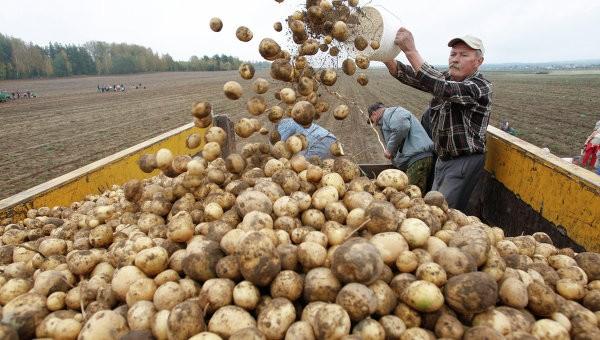 Белоруссия заключит контракты на поставку продовольствия в Москву