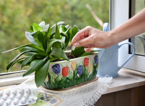 Признаки неправильного питания комнатных растений