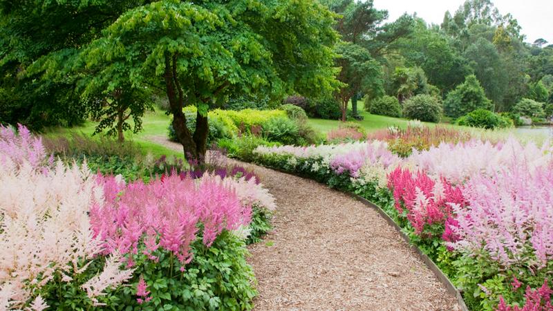 Пушистые метелки - астильба - украшение сада. Обсуждение на LiveInternet - Российский Сервис Онлайн-Дневников