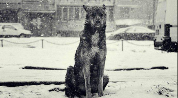 Пустые окна или Счастливчик - история одного бездомного пса...