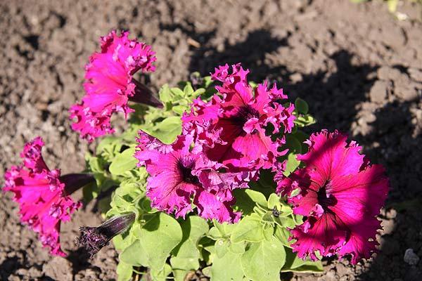 Моя цветочная коллекция - Все о комнатных растениях на flowersweb.info