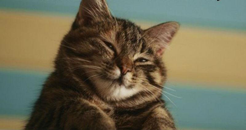 Господство котиков близко: в канадском университете кота выдвинули на должность члена совета директоров