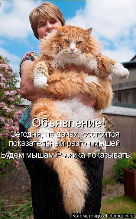 Новая котоматрица (35 фото)