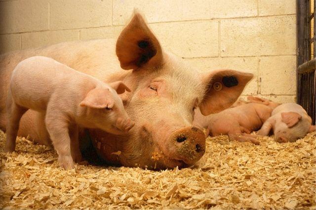 Россельхознадзор ввел запрет на ввоз кормов для животных из КНР