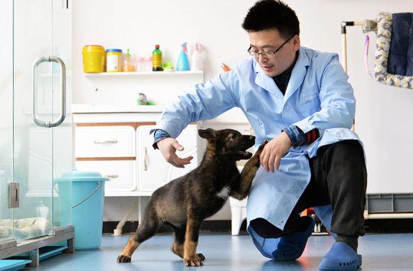 В Китае клонировали лучшую полицейскую собаку