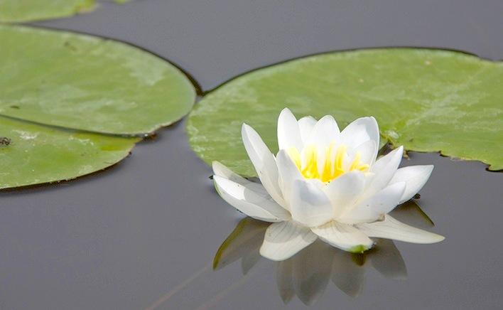 Как найти рыбу, ориентируясь по водной растительности?