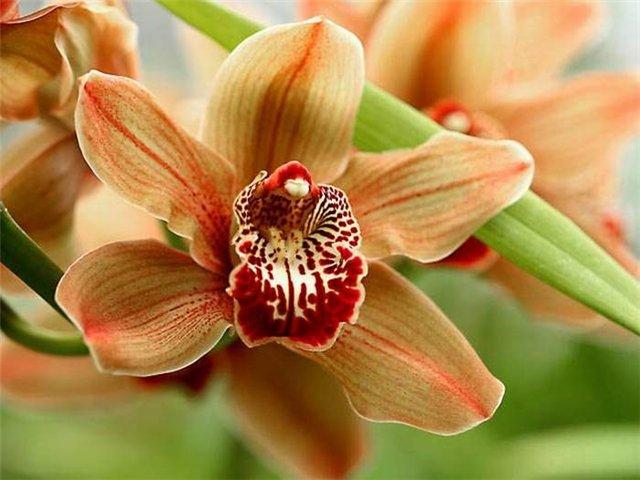 В либерецком ботаническом саду расцвели раритеты