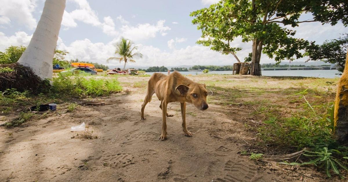 «Пляж мёртвых собак» — место, где не светит солнце… Но девушка-волонтер решила стереть его с лица Земли!