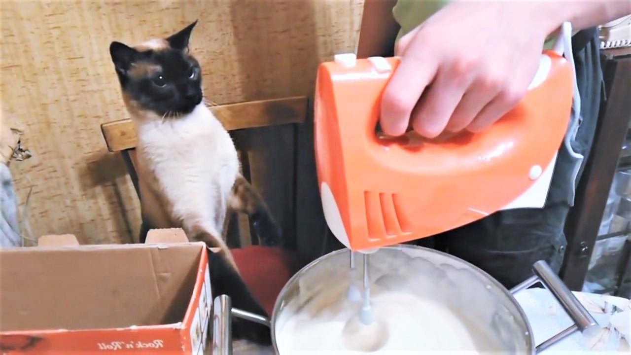 Прикольные видео с котиками …