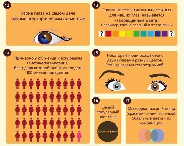 интересные факты о глазах3