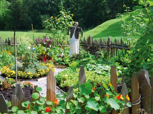 Огород на скорую руку: Нетрадиционный способ быстрого освоения садового участка