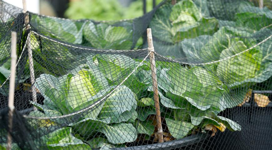 Сад огород защита от вредителей