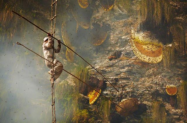 Это интересно: Гурунги — охотники за медом в фотопроекте Эндрю Ньюи (Andrew Newey)
