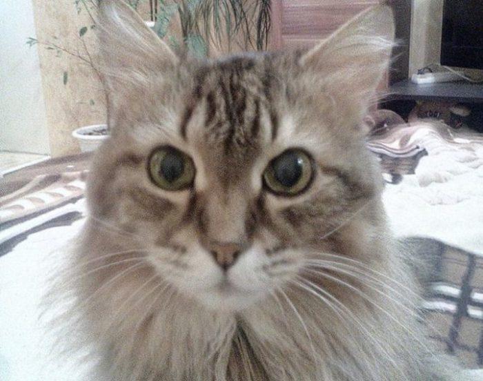 Кот Кузя или и кто после этого животное?!