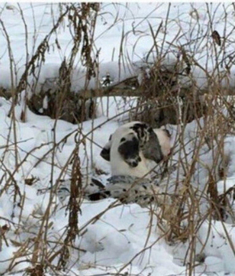Как тюменцы спасали молодого дога, привязанного к дереву