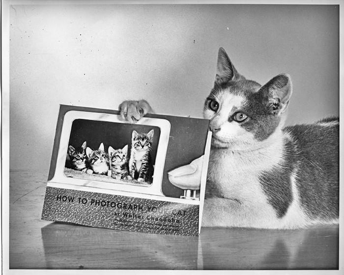Уолтер Чандоха – человек, который 70 лет фотографировал кошек   28 1