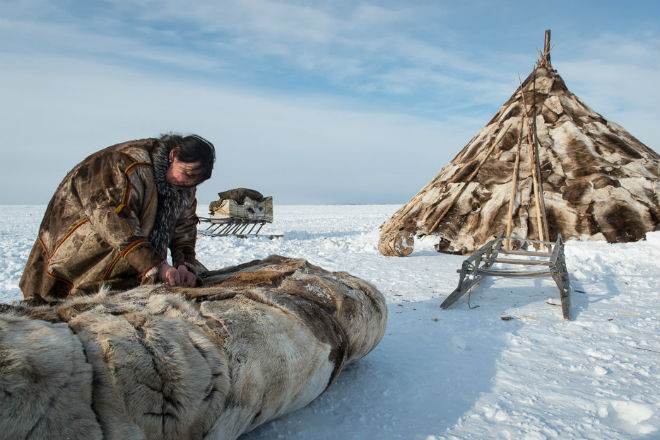 Как живут зимой в тундре