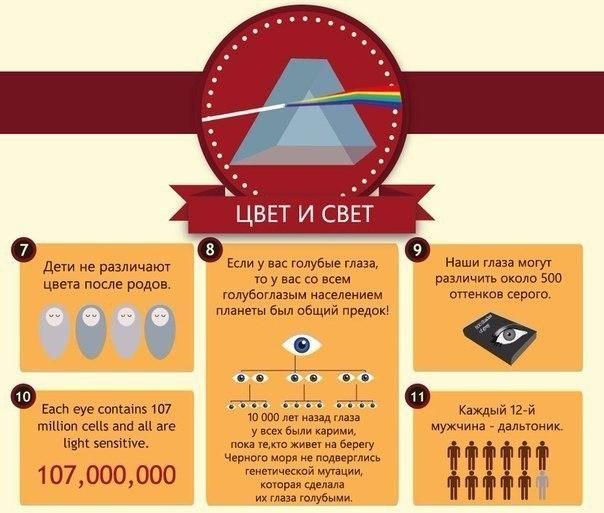 интересные факты о глазах2