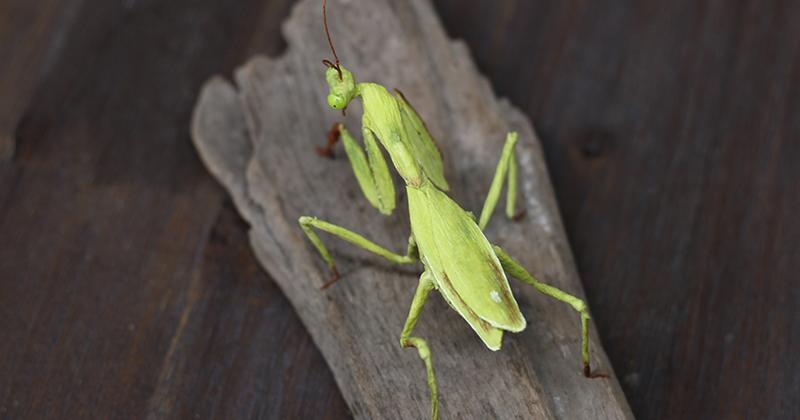 Бумажные насекомые, которых легко спутать с настоящими-24 фото-