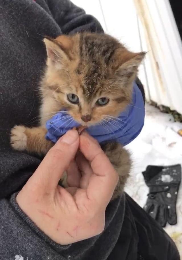 Идеальная спасательная операция для котенка