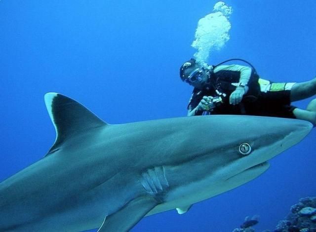Красоты подводного мира