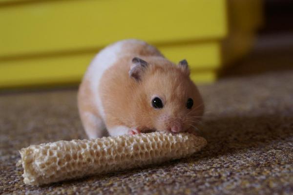 Результаты независимого российского исследования по изучению влияния ГМО на млекопитающих.