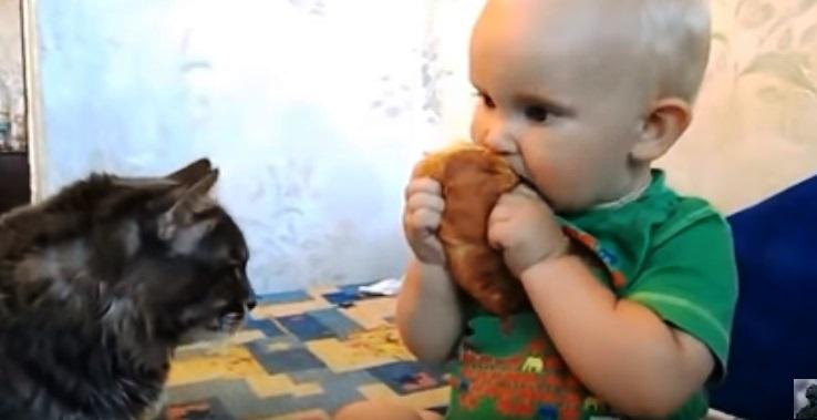Кот пришел к малышу за булкой. Реакция малыша — очаровательна!