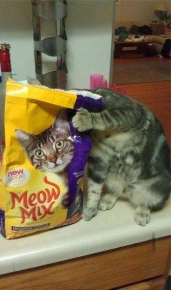 Прикольные фото котов, сделаные в самый нужный момент
