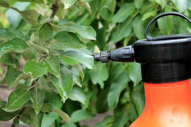 Народная химия. Стоит ли лечить растения содой, дрожжами и зеленкой?