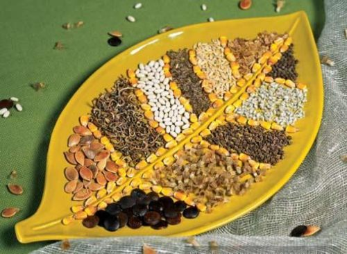 Срок годности семян: нужно ли закупать семена впрок ?