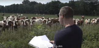 Мужчина устроил своеобразный живой концерт для коров