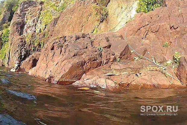 Летающий крокодил атаковал неосторожных туристов-фотографов в Австралии