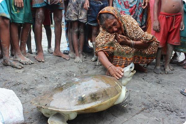 Чудесная находка редчайшей черепахи