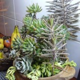 succulent-garden-in-home-and-outdoor1-12
