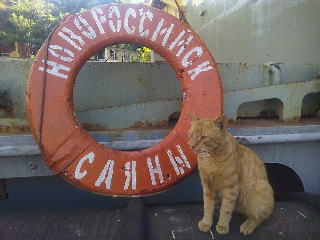 Год назад рыжий котяра прибился к военно-спасательному судну «Саяны» в Севастополе. Фото: Анна САДОВНИКОВА