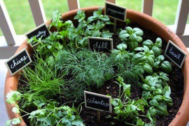13 простых и эффективных идей для создания зеленого сада на дому