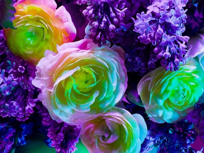 Неоновое цветение от мастера фотографии Торкила Гуднасона