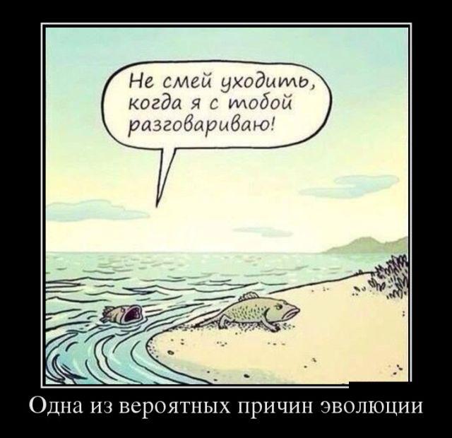 У бабы Зины жил кот-некромант))