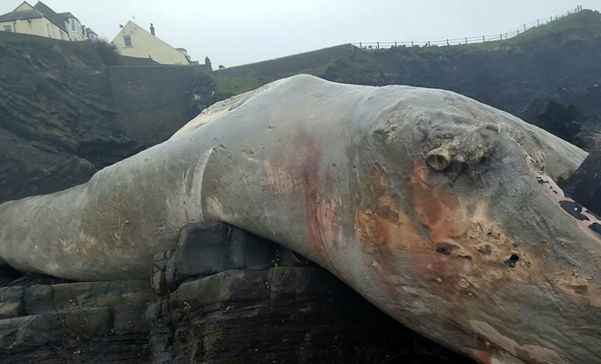 Рыбаки обнаружили странное огромное существо, которое выбросило на берег. Что это было?!