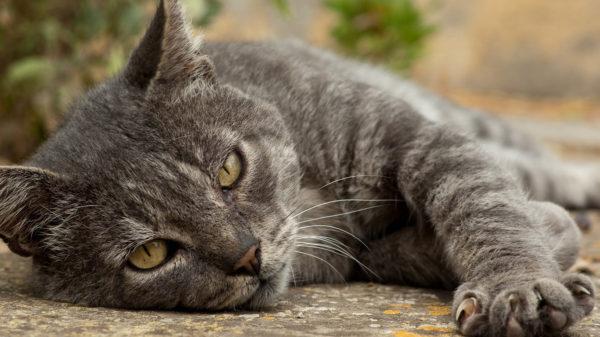 Малоизвестные факты о кошках