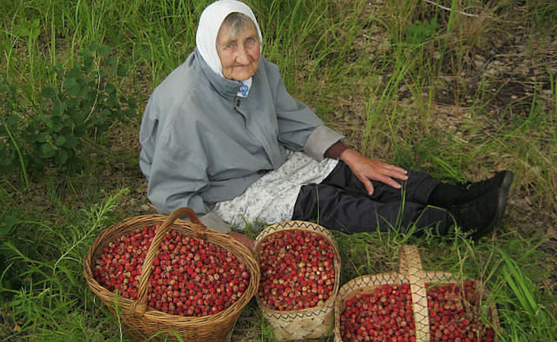 Россиян ждет новый налог - на сбор ягод и грибов