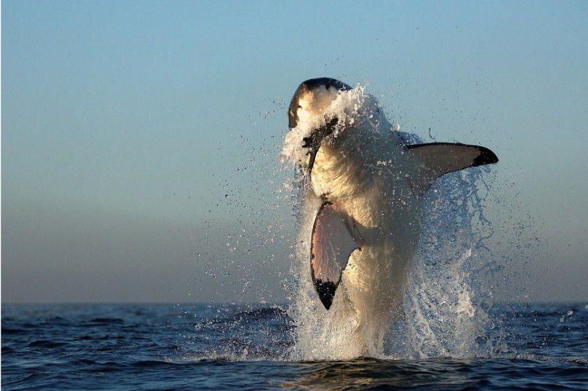 Страшные и прекрасные акулы  акулы, море