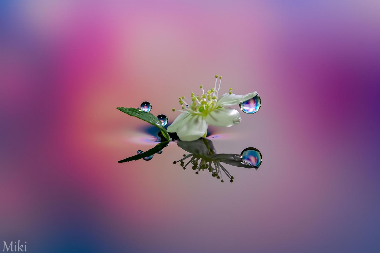 Фотография Dress up flower автор Miki Asai на 500px