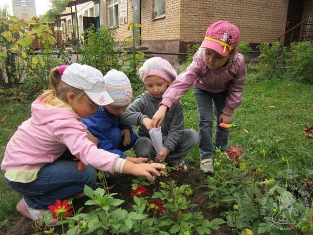 """Собираем семена цветов. """" ГБОУ Центр образования """"Школа здор…"""
