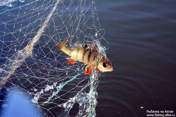 как ловить рыбу рыбацкой сетью