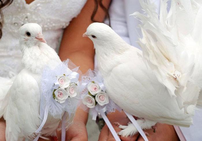 Белые голуби «на счастье».