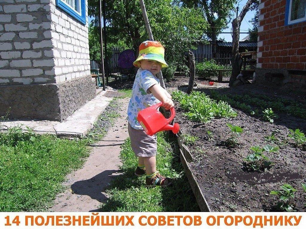 Советы огороднику